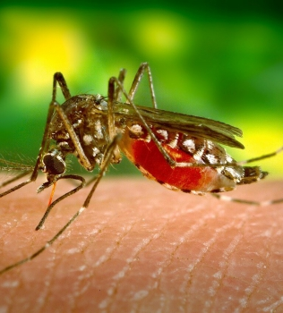 How to Easily Stop Mosquitoes Driving You Insane